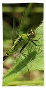Cameo Green Dragonfly Beach Towel