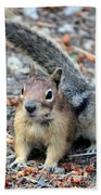 Campground Chipmunk Beach Towel