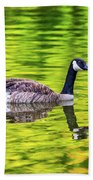 Canada Goose Swimming In A Pond Beach Towel