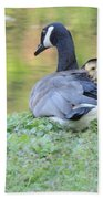 Canadian Goose Mother And Babies Beach Towel