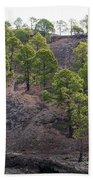 Canary Pines Nr 3 Beach Towel