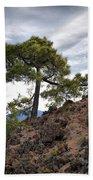 Canary Pines Nr1 Beach Towel