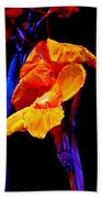 Canna Lilies On Black With Blue Beach Towel