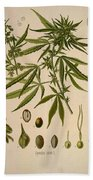 Cannabis Sativa  Beach Towel