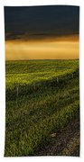 Canola And The Road Ahead Beach Towel