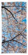Canopy Of Cherry Blossoms Beach Towel