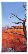 Canyon Tree Beach Towel