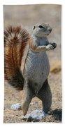 Cape Ground-squirrel  Beach Towel
