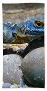 Cape Rock Lizard Beach Towel