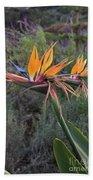 Captivating Bird Of Paradise In Full Bloom Beach Towel