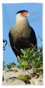 Caracara Portrait Beach Towel