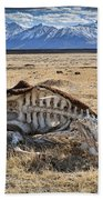 Carcass With A View Beach Towel