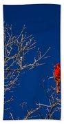 Cardinal Against Blue Sky Beach Towel
