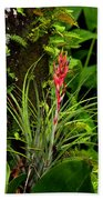 Cardinal Airplant Beach Towel