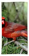 Cardinal Attitude Beach Towel