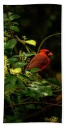 Cardinal In The Trees Beach Towel