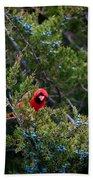 Cardinal Lunch Beach Towel