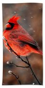 Cardinal On A Snowy Day Beach Towel