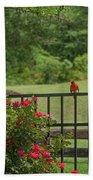 Cardinal On Fence Beach Towel