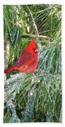 Cardinal On Ice Beach Towel