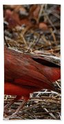 Cardinal On Pine Straw Beach Towel