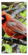 Cardinal Beach Sheet