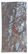 Cardinal Singing  Beach Towel