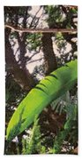Caribbean Banana Leaf Beach Towel