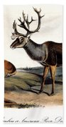 Caribou (rangifer Caribou): Beach Towel
