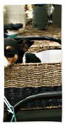 Carriage Dog Beach Towel