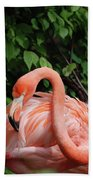 Carribean Flamingo Bird Ruffling His Feathers Beach Towel