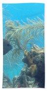 Carribean Sea Life Beach Towel