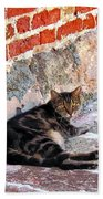 Cat Against Stone Beach Towel