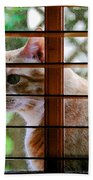 Cat At The Window Beach Towel