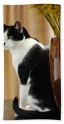 Cat Contimplation Beach Towel