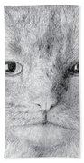 Cat Beach Sheet