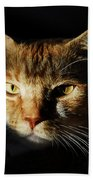 Cat In Shadow Beach Towel