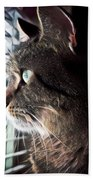 Cat Looking Out Window Beach Towel