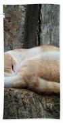 Cat On The Tree Beach Towel
