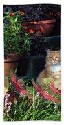 Cat Postcard Beach Towel