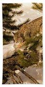 Cat Walk Beach Towel