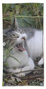 Cat Yawning In The Garden Beach Towel
