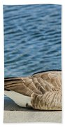 Catching Some Rays Beach Towel