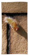 Caterpillar With Shadow Beach Towel
