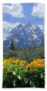 Dm9328-cathedral Group Tetons  Beach Towel