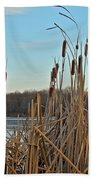 Cattails At Skymount Pond Pa Beach Towel