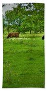 Cattle Grazing In A Lush Pasture Beach Towel