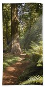 Cedar Path Beach Towel