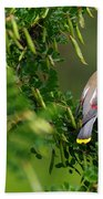 Cedar Waxwing #1 Beach Towel