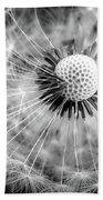 Celebration Of Nature In Black And White Beach Towel